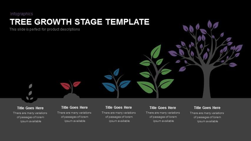 Tree Growth Stage Powerpoint and Keynote template