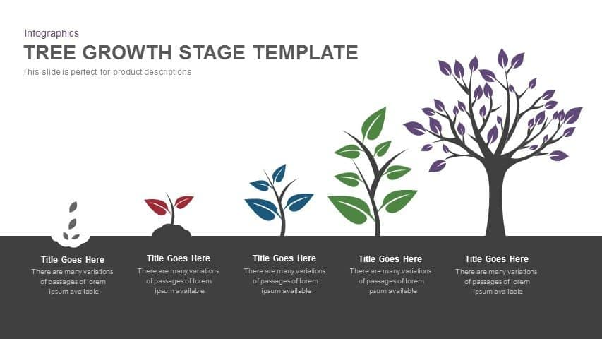 Tree Growth Stage PowerPoint Template and Keynote