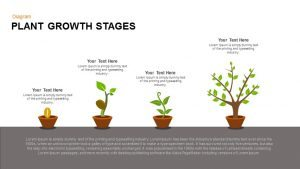 Growing Plant Stages PowerPoint Template and Keynote Slide