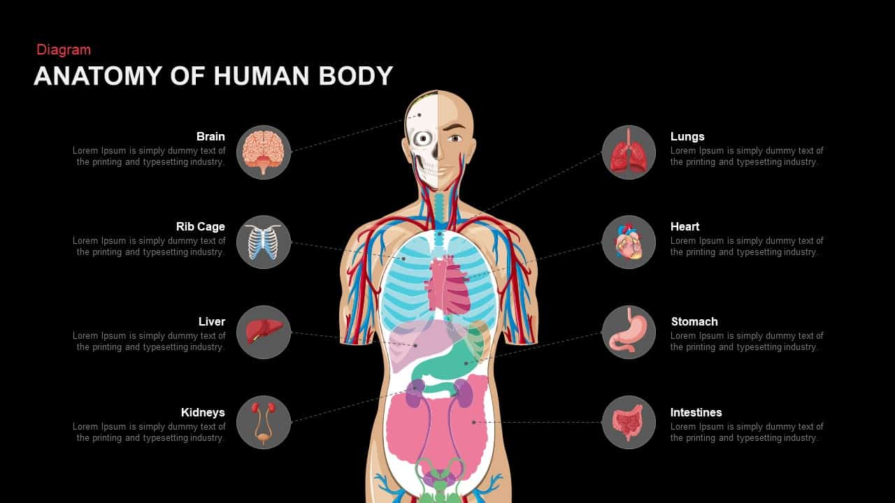 Anatomy Of The Human Body Powerpoint Template And Keynote Slide