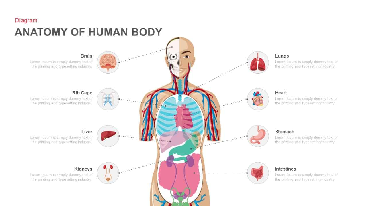 Anatomy Of Human Body PowerPoint template